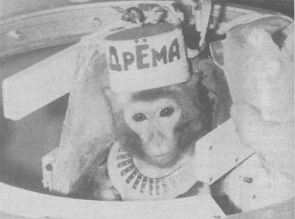 ka5-35 История: обезьяны - космонавты приземлились в якутской тайге